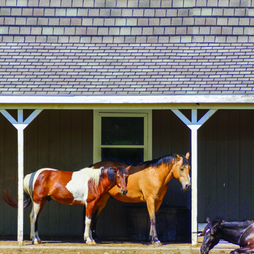 Horse & Livestock Food, Supplies, Fly Sprays, and More at Soldans Pet