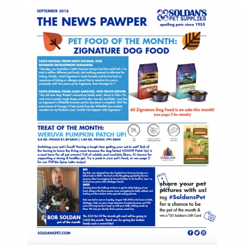 September News Pawper