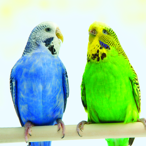 Domestic Bird Food, Toys, Treats, Supplements, Carriers and more