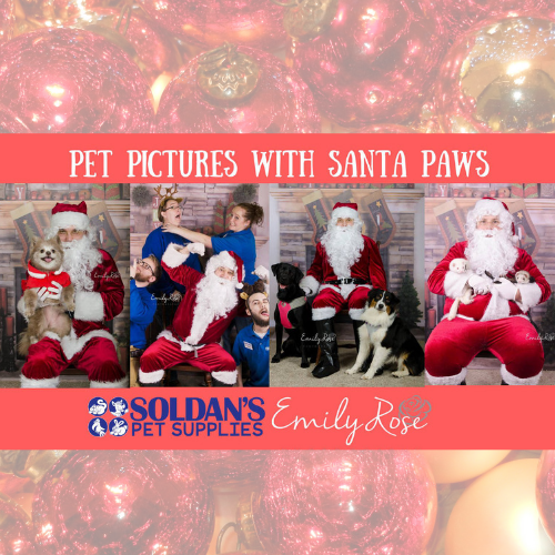 Pet Pictures with Santa Paws at Soldan's Okemos