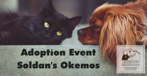 Adoption Event w/ Ingham County Animal Control & Shelter