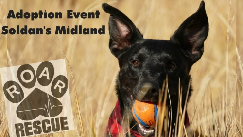 Dog Adoptions at Soldan's in Midland