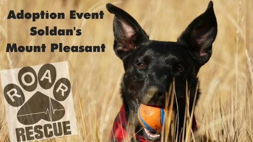 Dog Adoptions at Soldan's in Mt. Pleasant