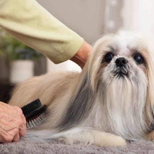 doggy grooming service images