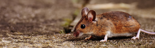 Keep Rodents out this winter