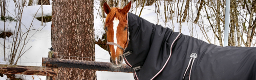 Horse Blankets Available: