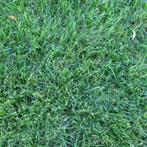 Rohrer Seeds SuperSport Grass Mix