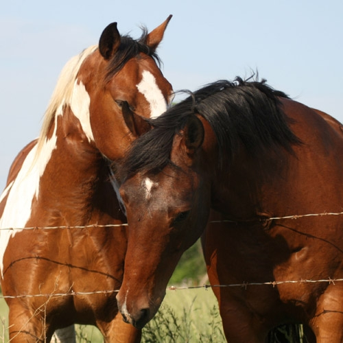 Equine & Livestock Feed & Supplies