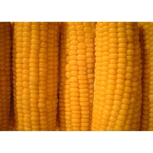 25lb Ear Corn (Corn on the Cob)