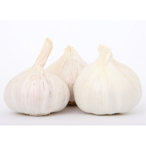 Garlic Jumbo 3ct Pack