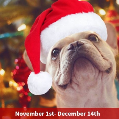 Pet Holiday Donation Bins