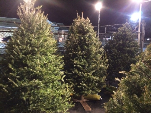 Fresh Cut Balsam Christmas Trees