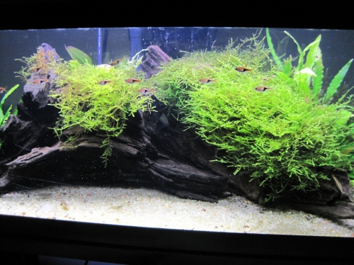 Acquarium Plants