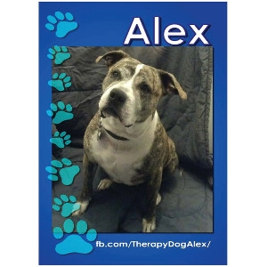 Alex, the Therapy Dog