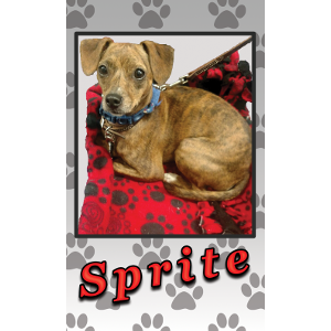 Sprite, the Therapy Dog