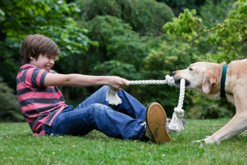 Does Tug-of-War Teach Aggression?