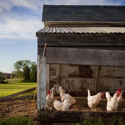 Rural Homesteading