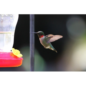 Save on all Hummingbird Feeders in stock