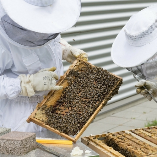 Beginner Beekeeping Lecture Series