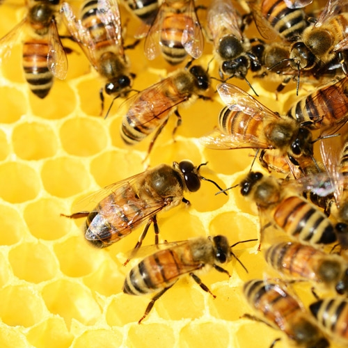2019 Continuing Beekeeping CLASS Registration