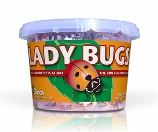 Lady Bugs (500/Cup)