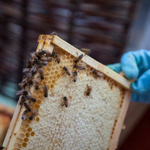 Continuing Beekeeping Class Registration