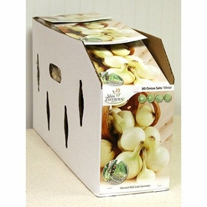 Onion – White – Pack of 80