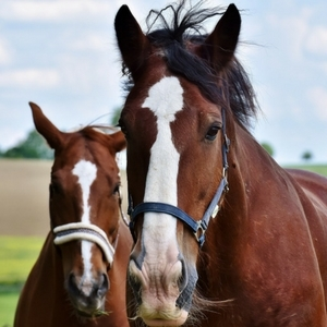 Buy 9 Get 1 Free- Select Horse Feed