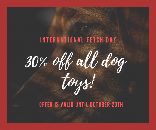 International Fetch Day!