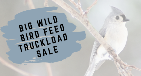 Big Wild Bird Seed Truckload Sale!
