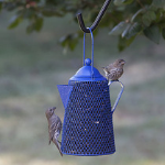 Perky-Pet® Coffee Pot Mesh Bird Feeder