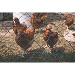 20% Off Chicken Coops