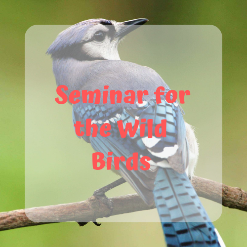 Seminar for the Wild Birds
