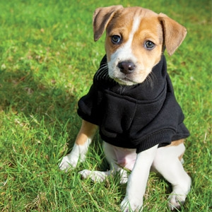 20% Off All Dog Sweaters
