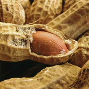 Raw Peanut With Shell 50 lb.