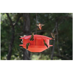 The Humm-bug feeder