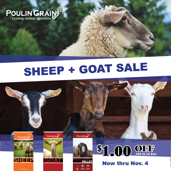 Poulin Grain Goat and Sheep Feed - save one dollar off fifty pound bags