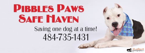 Pibbles Paws Safe Haven Rescue Meet and Greet