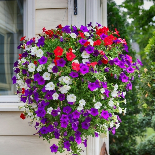Save on Hanging Baskets