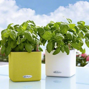 Lechuza® Cube Cottage 30 Self Watering Planters