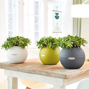 Lechuza® Puro Color 20 Self Watering Planters