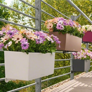 Lechuza® Balconera Color 50 Self Watering Planters