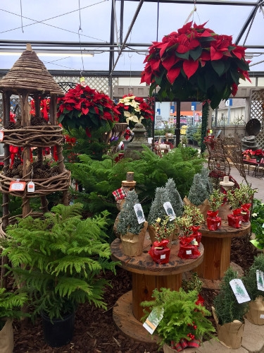 Christmas at Barrett's Showplace Gardens