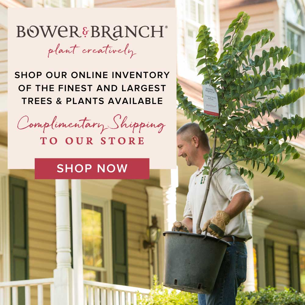 Bower & Branch Supplied Image