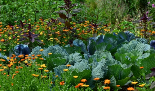 Gardening Tip: Planting Cool Weather Annuals