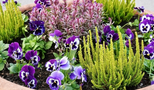 Gardening Tip of the Week: Miniature Gardening