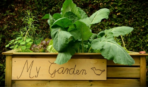 Gardening Tip: Vegetable Gardening