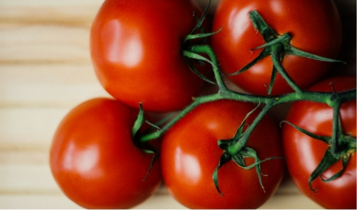Plant of the Week: Tomatoes
