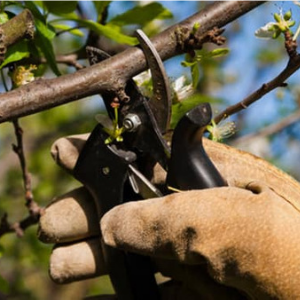 Fruit Tree Pruning and Care Seminar