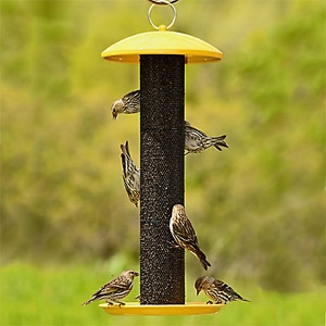 Perky Pet® No/No® Straight-Sided Finch Tube Feeder